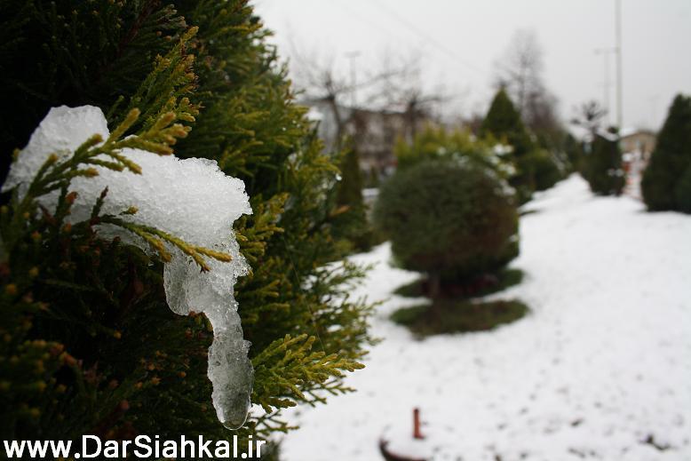 برف 4