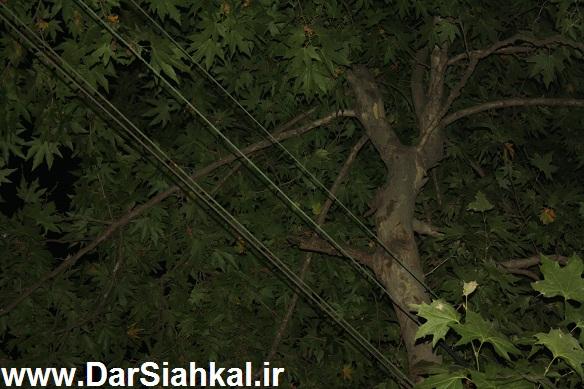 sim_bargh_siahkal (1)