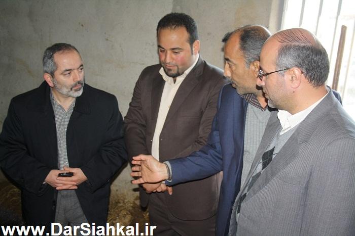 damdari_dar_siahkal (12)