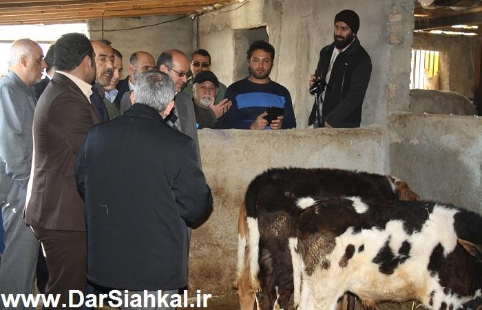 damdari_dar_siahkal (15)