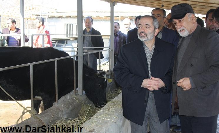 damdari_dar_siahkal (3)