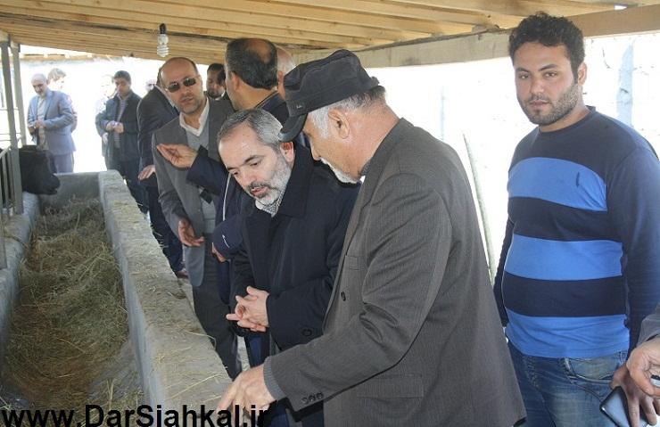 damdari_dar_siahkal (4)