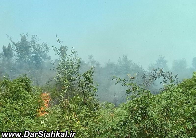 atashsozi_jangal_dar_siahkal (10)
