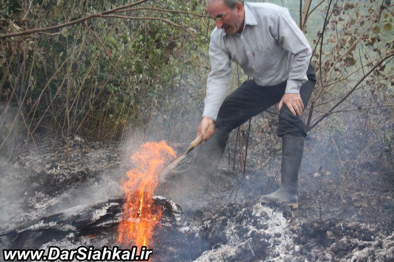 atashsozi_bagh_chay_dar_siahkal (10)