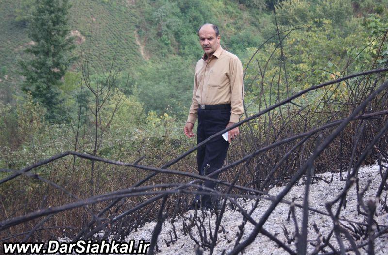 atashsozi_bagh_chay_dar_siahkal (11)