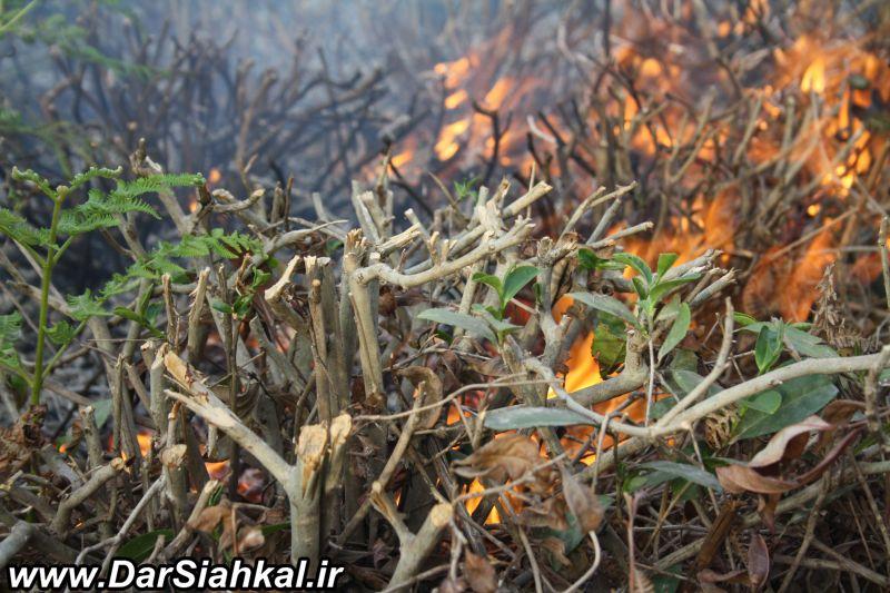 atashsozi_bagh_chay_dar_siahkal (7)