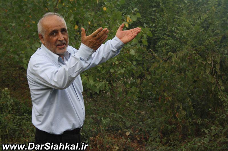 atashsozi_bagh_chay_dar_siahkal (8)