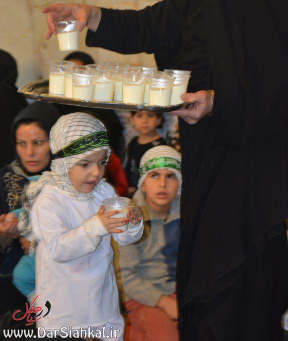 shirkharegan_dar_siahkal (7)