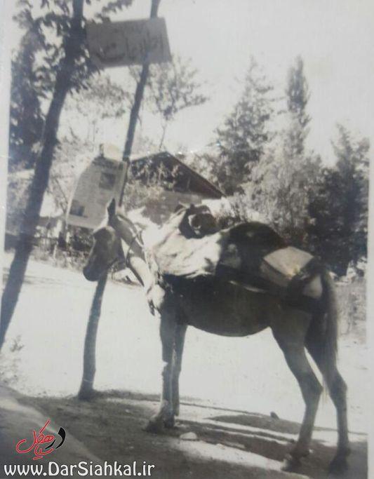 موسی اکبری خبرنگار سیاهکل پاشاکی (۲)